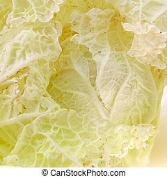 Cabbage detail with leaves texture