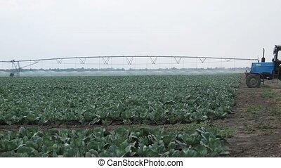 Cabbage fertilizer