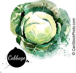 cabbage., hand, vattenfärg, bakgrund., vec, oavgjord, vit,...