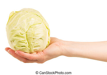 Cabbage head in  female hand isolated on white background.
