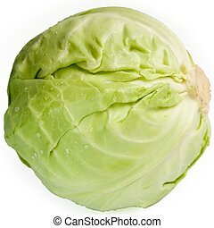 cabbage-head on a white background