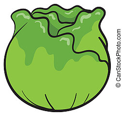 Cabbage  - illustration of a cabbage on a white background