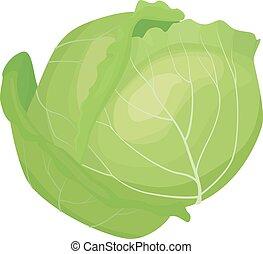 Cabbage illustration vector