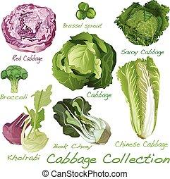 Cabbage Image set