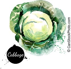 cabbage., kéz, húzott, vízfestmény festmény, white, háttér.,...