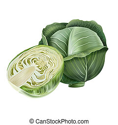 Cabbage on white background - Cabbage realistic isolated ...
