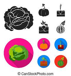 Cabbage, pumpkin, onion, buriak. Plant set collection icons in black, flat style bitmap symbol stock illustration web.