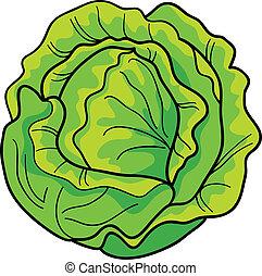 cabbage - cartoon Illustration of green cabbage
