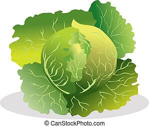 Cabbage vector illustration.