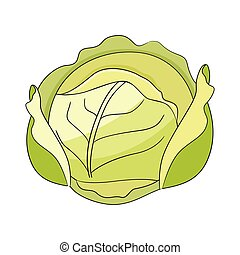 Cabbage vector illustration isolated on white background.