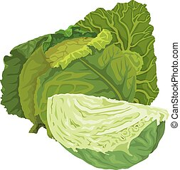 cabbage., vector, verde