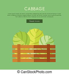 Cabbage Vector Web Banner in Flat Style Design.