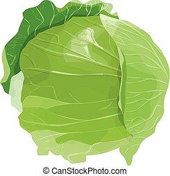 cabbage., verde, isolato
