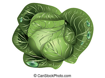 cabbage with drops of water