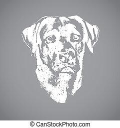 cabeça, cão, retriever labrador