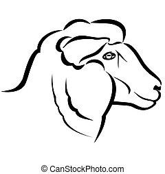 cabeça carneiros