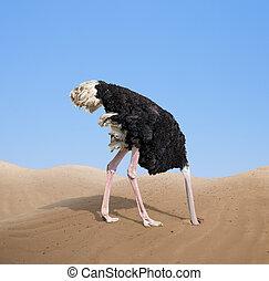 cabeça, conceito, enterrar, assustado, avestruz, areia, seu