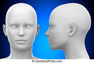 cabeça, -, ilustração, femininas, em branco, frente, branca, vista, lado, 3d