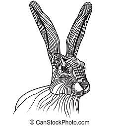 cabeça, lebre, ilustração, vetorial, coelho, ou
