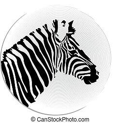 cabeça, vetorial, imagem, zebra