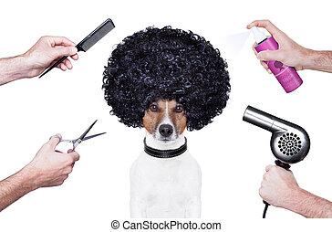 cabeleireiras, tesouras, pente, cão, pulverizador