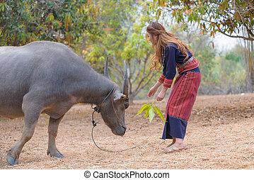 cabelo longo, senhora asiática, tentar, alimentar, búfalo, com, licença, em, dela, mão.