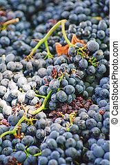 cabernet sauvignon, stellenbosch, s., áfrica
