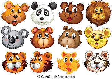 cabeza, animales, diferente