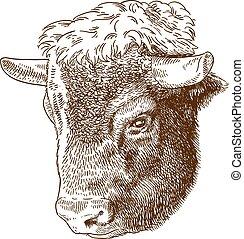 cabeza, bisonte, aguafuerte, ilustración