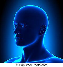 cabeza, bl, -, detalle, anatomía, iso, vista