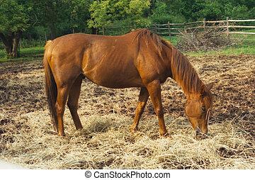 cabeza, caballo, doblado