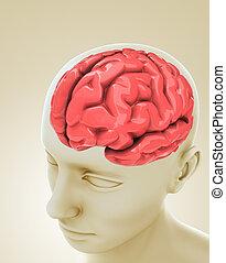 cabeza, cerebro