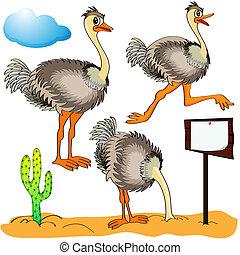cabeza, corre, cost(stand)s, cubiertas, avestruz, arena,...