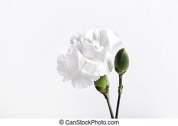 cabeza, flor