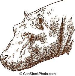 cabeza, grabado, hipopótamo, ilustración