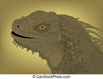 cabeza, iguana