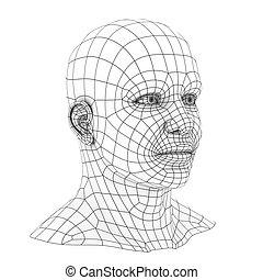 cabeza,  wireframe, humano,  3D