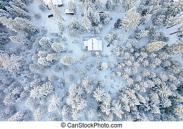 Cabin in the middle of a snowy forest