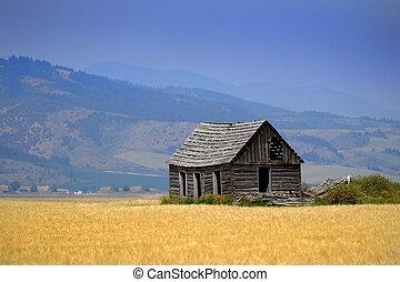 Cabin Old Homestead on Farmground Field of Grain
