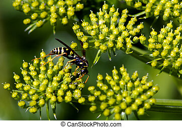 Wasp insect - CABLE BAY, NZ - SEP 10:Wasp insect on Sep 10 ...