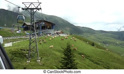 Cable car climb from Grindelwald to Mount First, Switzerland. Panoramic vies and Swiss cows on the Alps slopes.