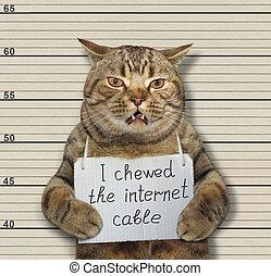 cable, masticado, gato, internet, malo