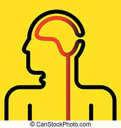 cabo, cérebro, espinhal, pictograma