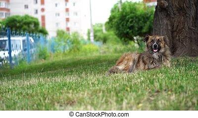 cabot, chien, sdf, grass., errant, reposer, outdoors., arbre...