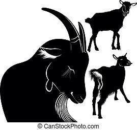 cabra, animais, agricultura