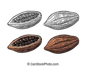 cacao, beans., vector, vendimia, grabado, ilustración, fruits