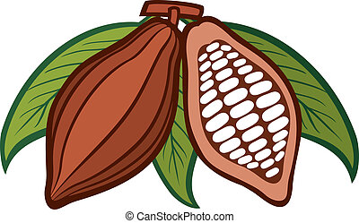 Cacao - cocoa beans
