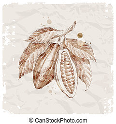 cacao, dessiné, haricots, branche, main