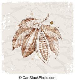 cacao, dibujado, frijoles, rama, mano