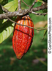 Close-up of a cacao plant